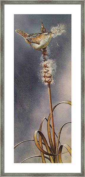 Wren And Cattails Framed Print