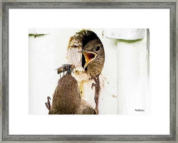 Wren Breakfast Framed Print