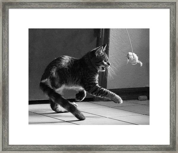 Xena Playing Framed Print