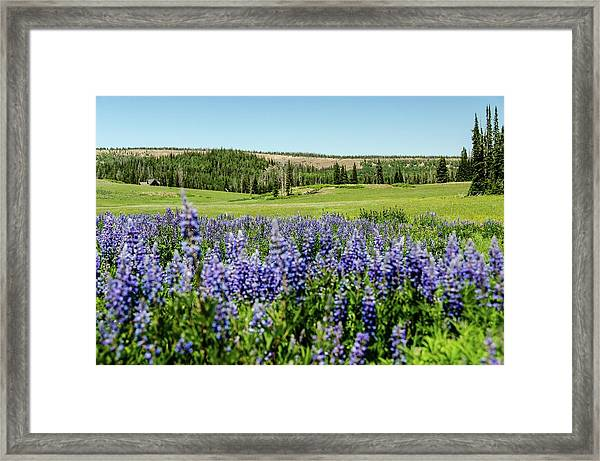Yard Full Of Wildflowers Framed Print