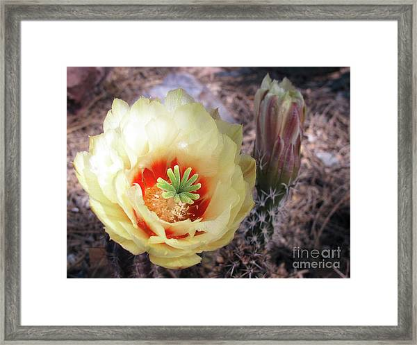 Yellow Alicoche Framed Print