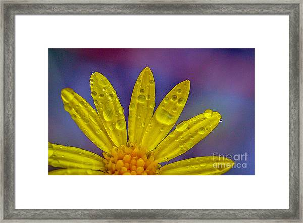 Framed Print featuring the photograph Yellow And Dew by Tom Claud