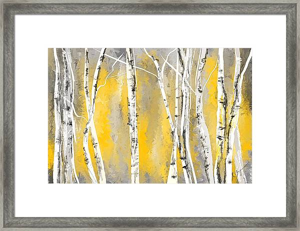 Yellow And Gray Birch Trees Framed Print