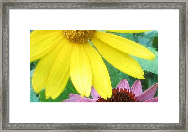 Yellow And Purple Framed Print by Krista Barth