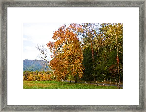 Yellow And Red Tree Framed Print