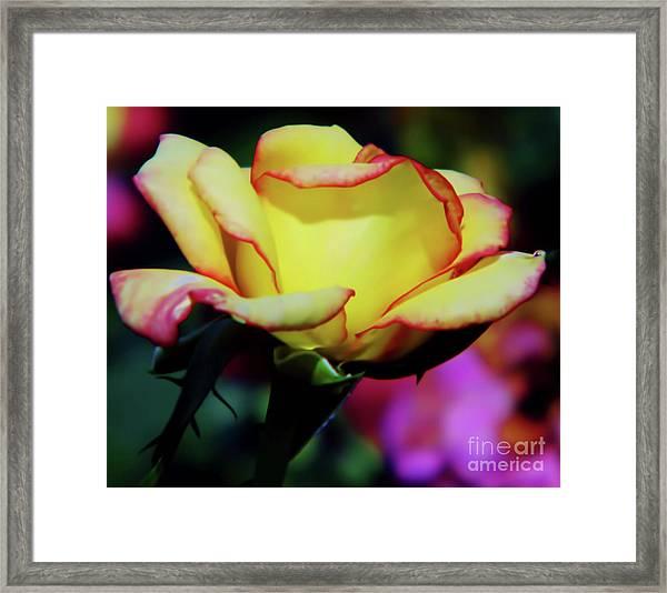 Yellow Beauty Framed Print