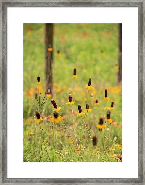 Yellow Cone Flower Framed Print