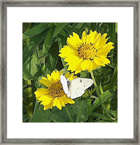 Yellow Cow Pen Daisies Framed Print