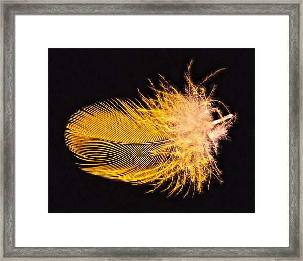 Framed Print featuring the photograph Yellow Feather Macro by Bob Slitzan