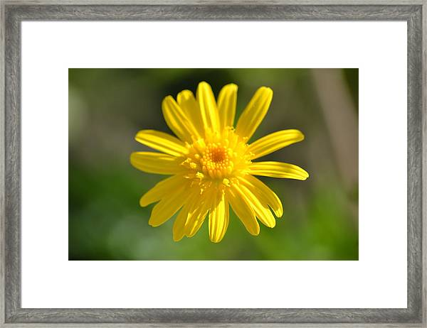 Yellow Fireworks Framed Print
