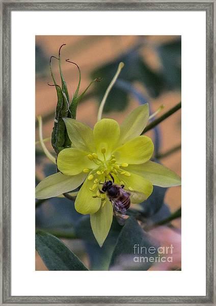 Yellow Flower 5 Framed Print