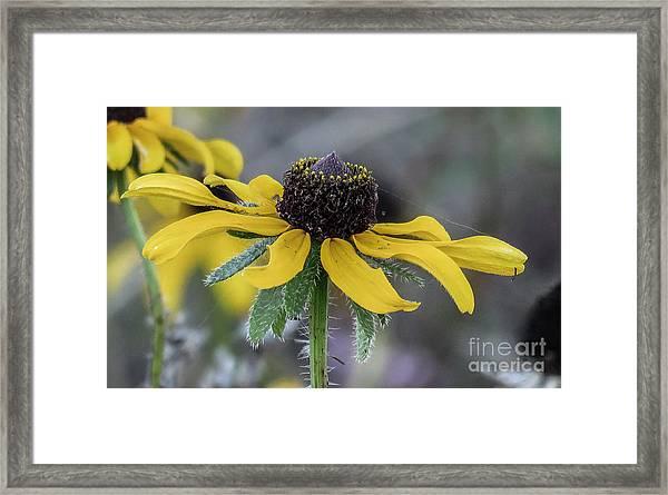 Yellow Flower 6 Framed Print