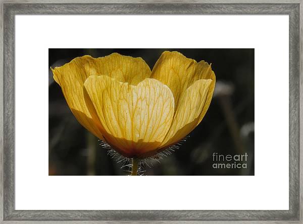 Yellow Flower 4 Framed Print