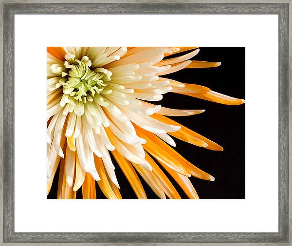 Yellow Flower On Black Framed Print