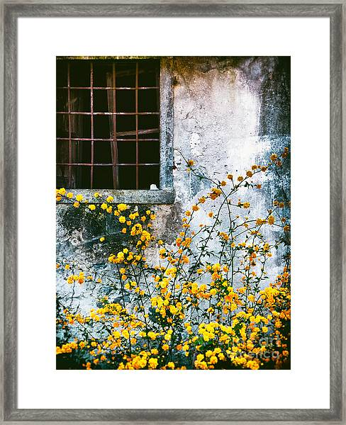 Yellow Flowers And Window Framed Print