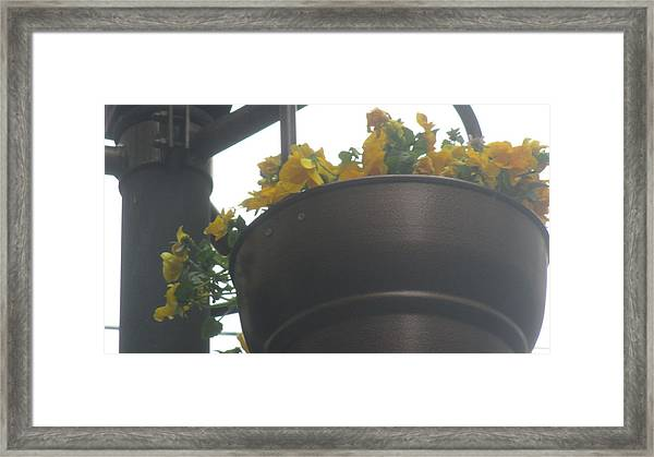 Yellow Flowers Hanging Framed Print