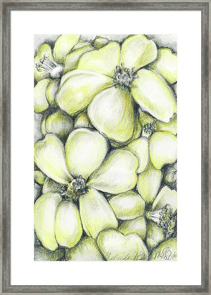 Yellow Flowers Pencil Framed Print