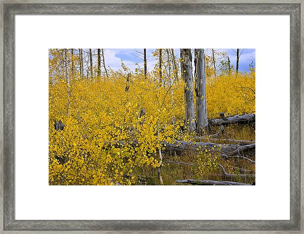 Yellow In Grand Teton Framed Print