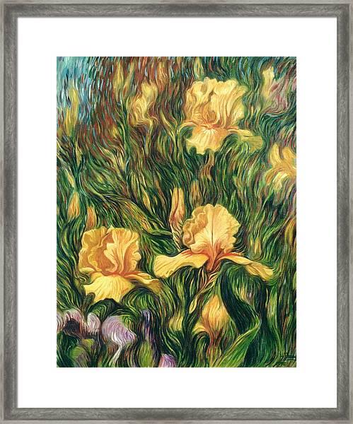 Yellow Irises Framed Print
