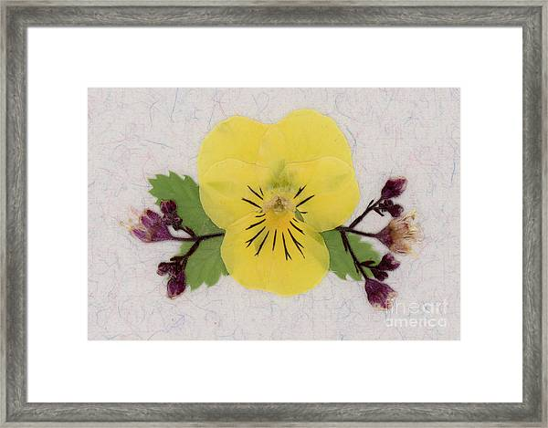 Yellow Pansy And Coral Bells Pressed Flowers Framed Print