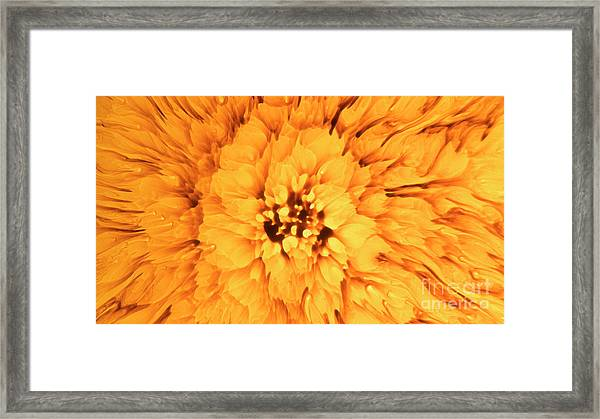 Yellow Flower Under The Microscope Framed Print
