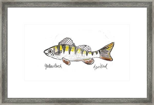 Yellow Perch Framed Print