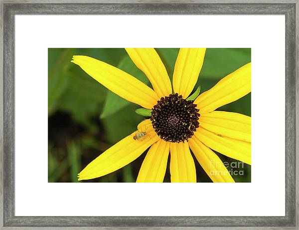 Yellow Petaled Flower With Bug Framed Print