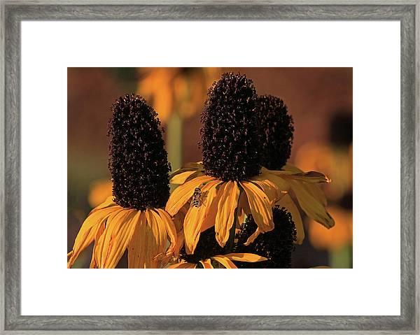 Yellow Prairie Mexican Hat Framed Print