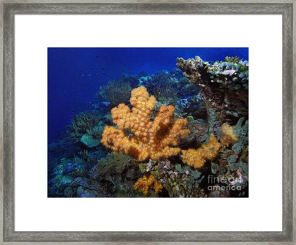 Yellow Soft Coral Framed Print