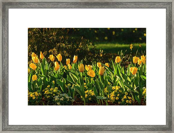 Yellow Spring Fever Framed Print