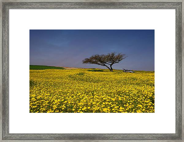 Yellow Spring Framed Print