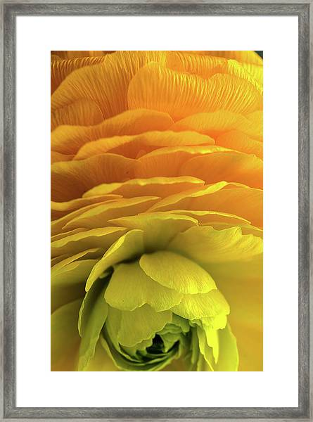 Yellow Stack Framed Print