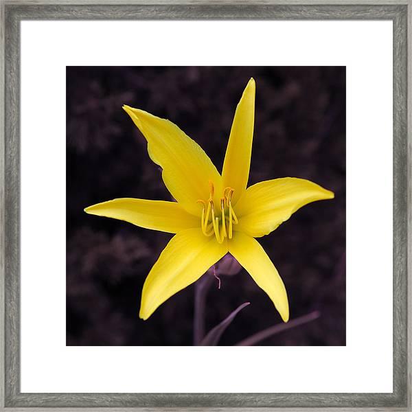 Yellow Star Framed Print