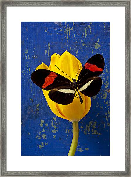 Yellow Tulip With Orange And Black Butterfly Framed Print