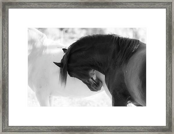 Yin Yang Framed Print