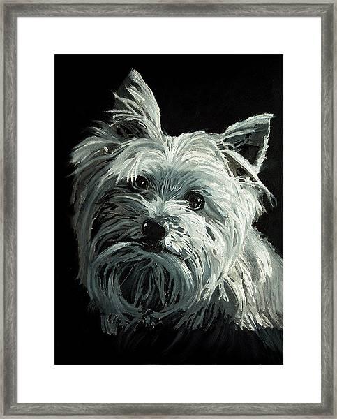Yorkie Framed Print
