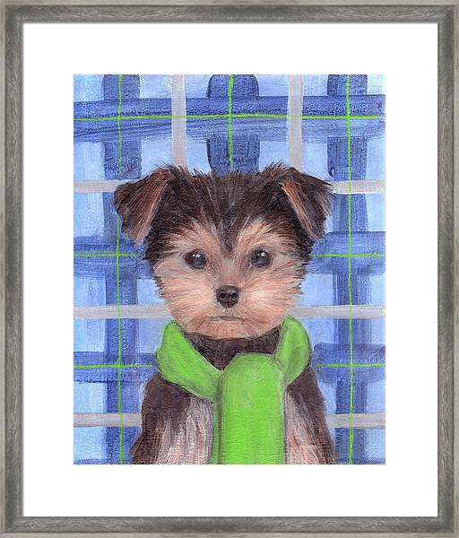Yorkie Poo With Scarf Framed Print