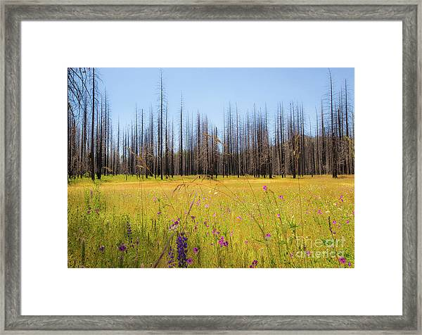 Yosemite Juxtaposition By Michael Tidwell Framed Print