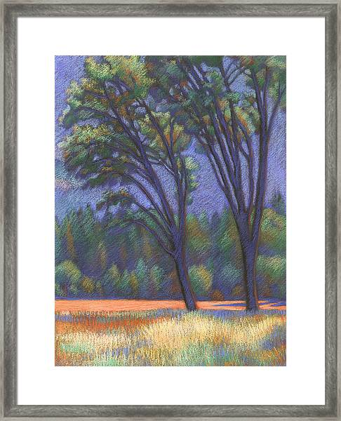 Yosemite Trees Framed Print