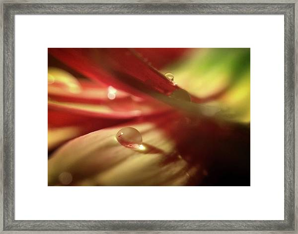 You Just Put One Under Your Tongue Framed Print