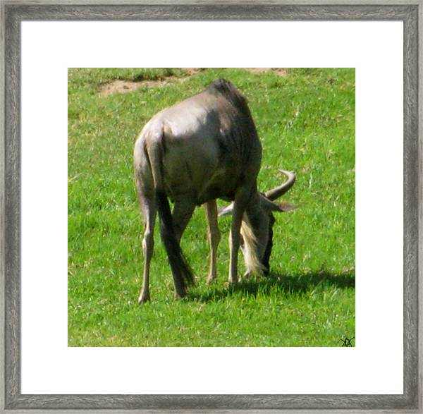 You'er Such A Wildebeest Framed Print