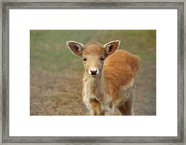 Young And Sweet Framed Print