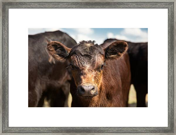 Young Angus Framed Print