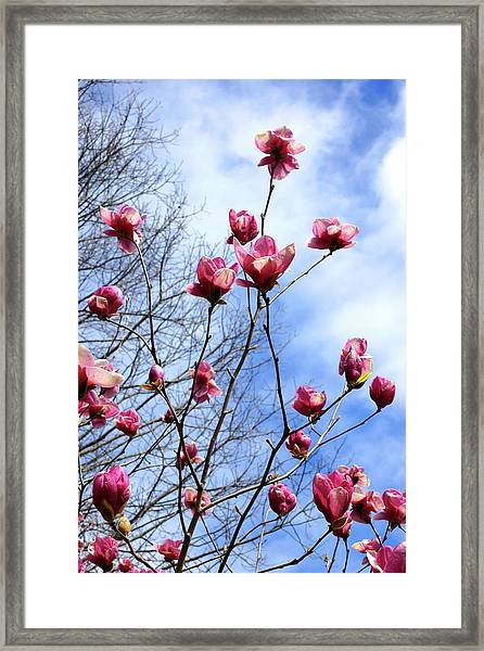 Young Blooms Framed Print