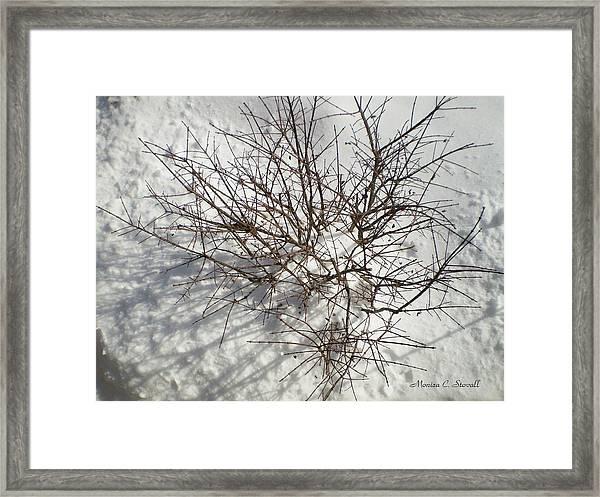 Young Burning Bush In Winter Framed Print