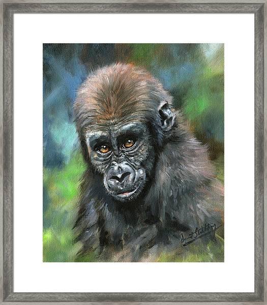Young Gorilla Framed Print