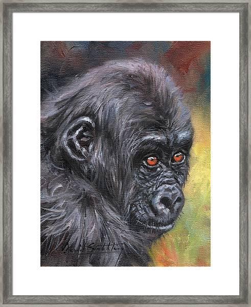 Young Gorilla Portrait Framed Print