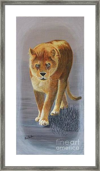 Young Male Lion Framed Print