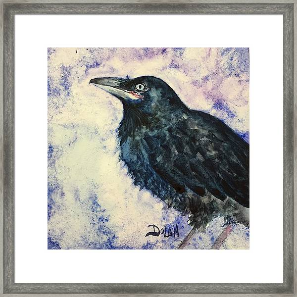 Young Raven Framed Print