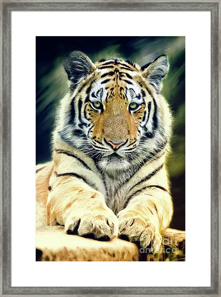 Young Tiger Framed Print